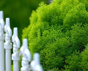 clôture niort